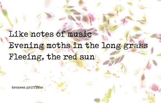 bronwen griffiths moth hailku