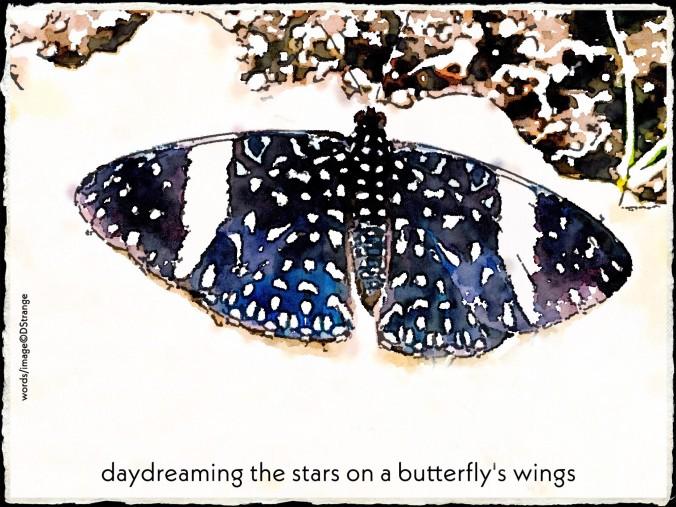 Debbie Strange a blue morpho butterflies