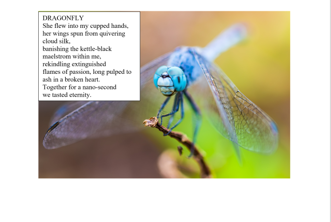 Dragonfly by Margaret Royall