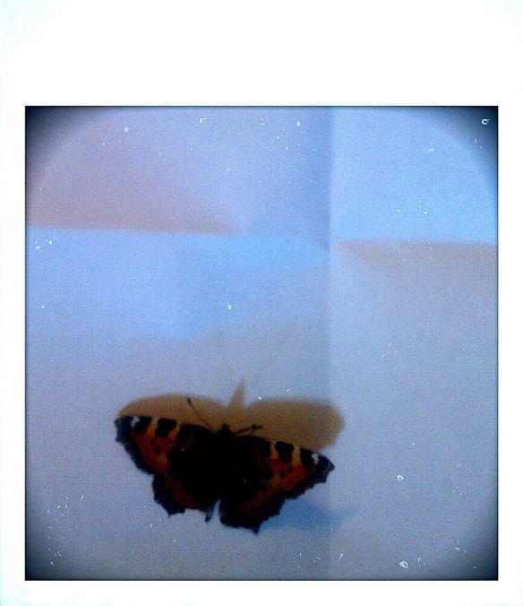 sonja butterfly