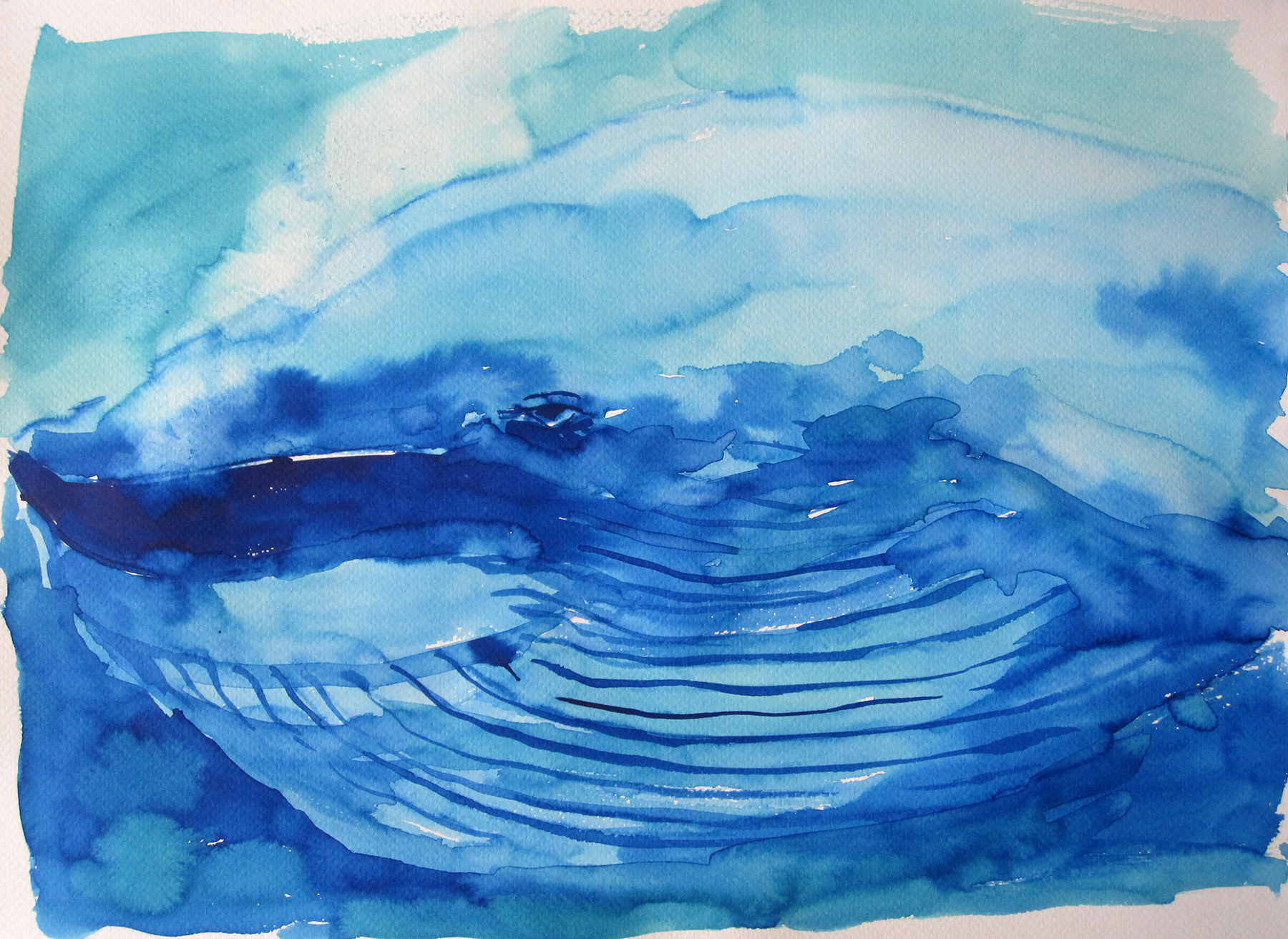 blue whale_KR12