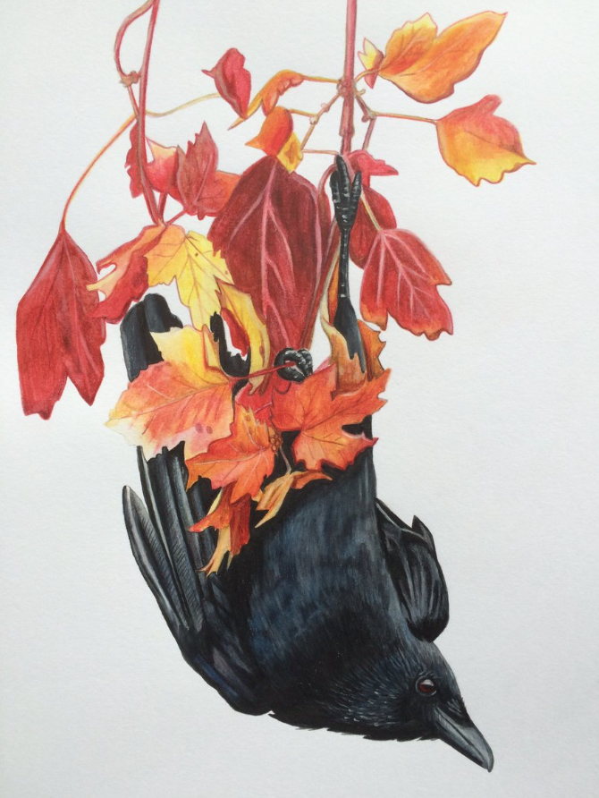 Crow by Kirstin Armstrong