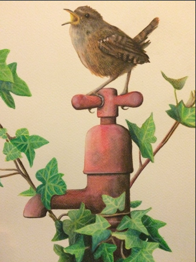 Wren by Kirstin Armstrong