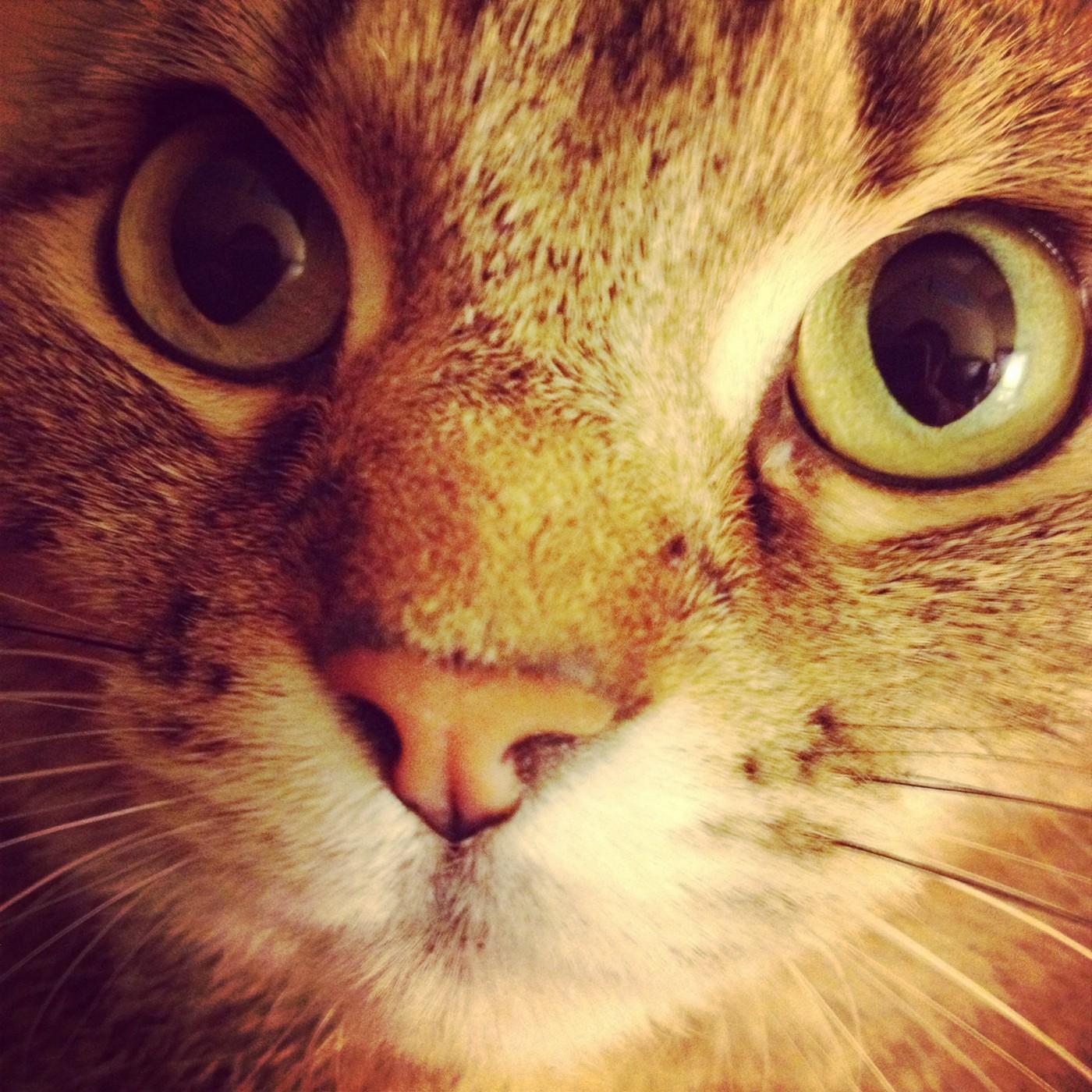 cat's eyes by Rachel B. Baxter