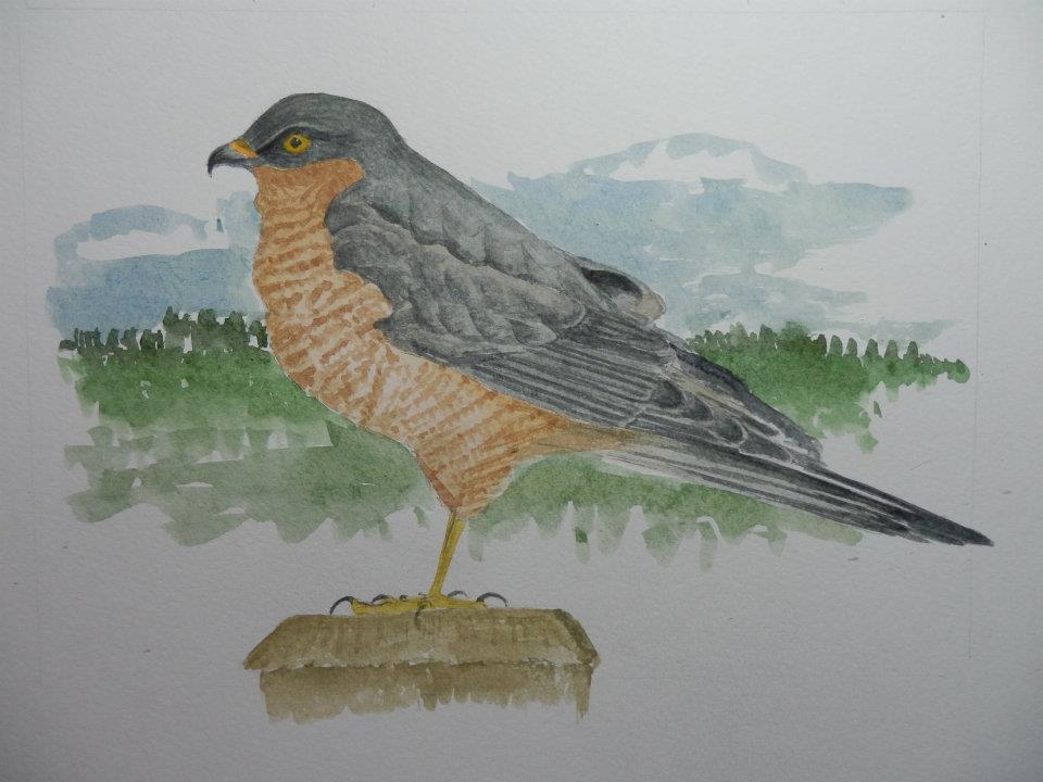 JL25 Sparrowhawk