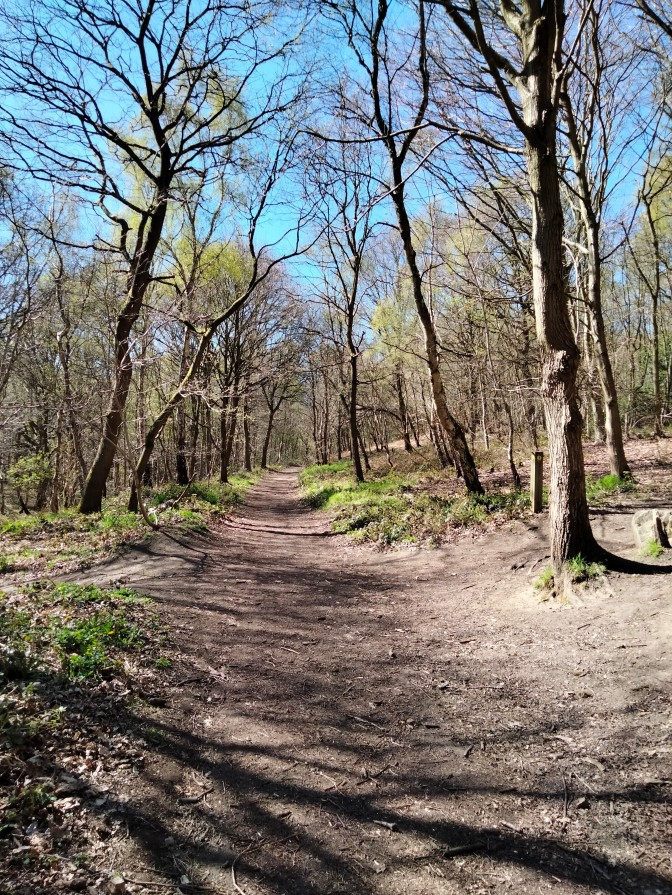 Wombwell Woods by Paul Brookes