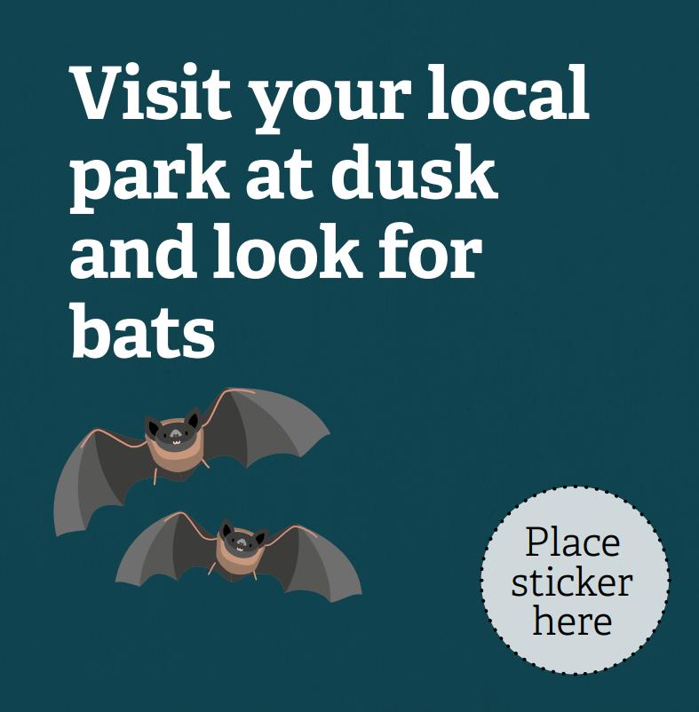 bats 30 Days Wild