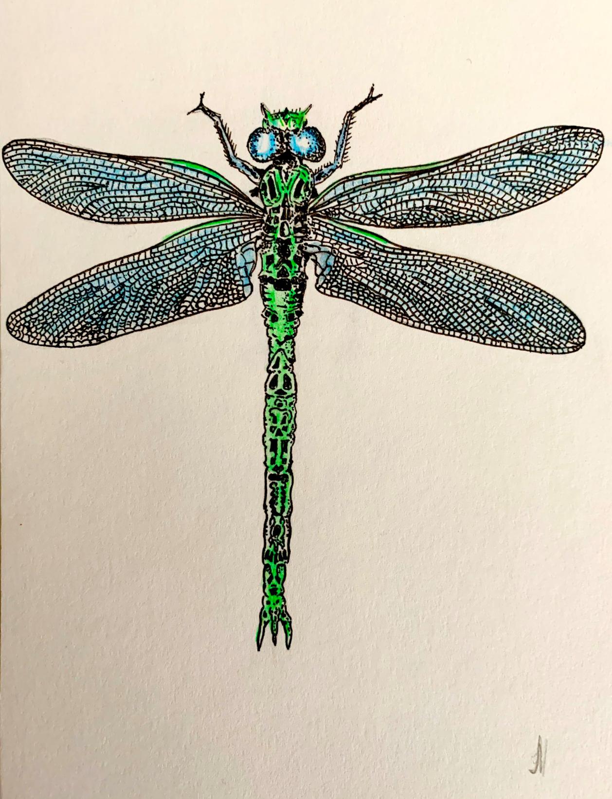 Dragonfly by John Hawkhead