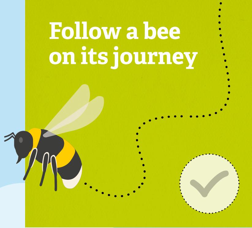 Follow a bee 30daysWild
