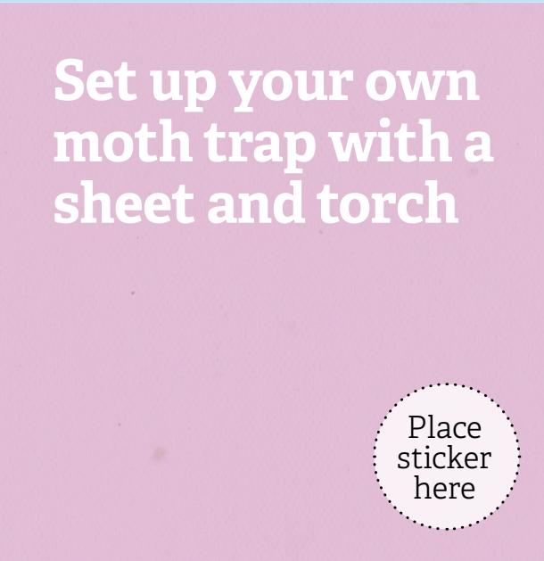 Moth Trap 30 Days Wild