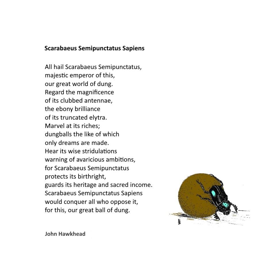 scarab by John Hawkhead