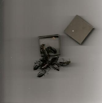 Beetles by sonja benskin mesher