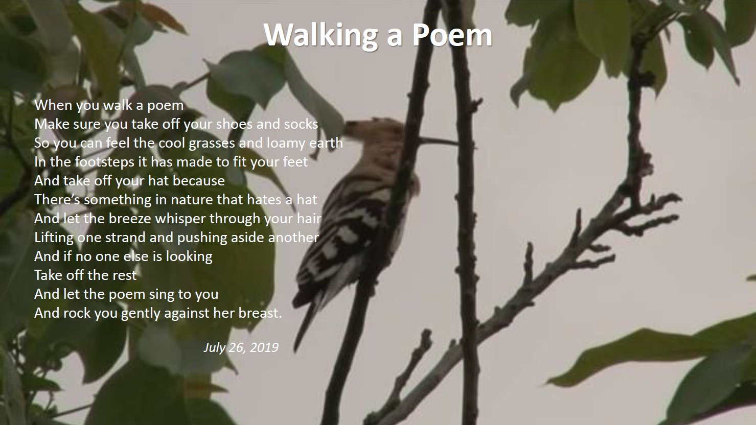 Walking A Poem by Mike Stone
