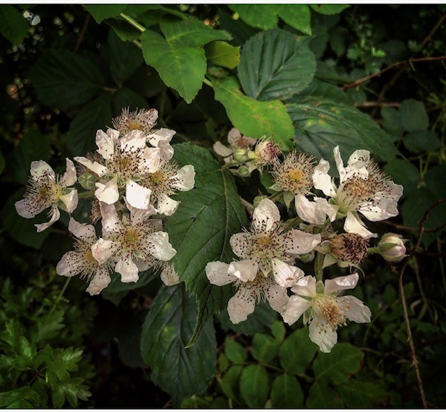 wildflower 8