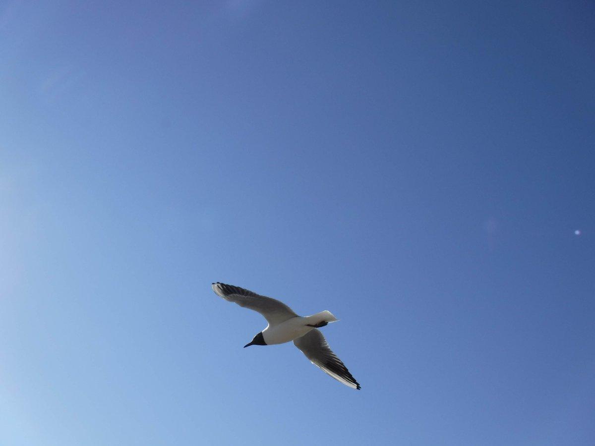 Black headed gull by Cath Barton