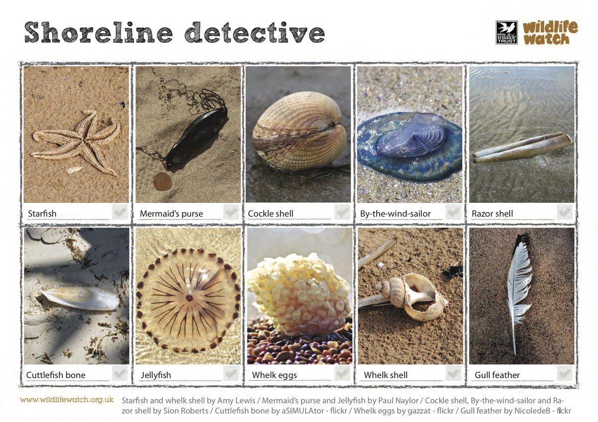 shoreline detective strandline