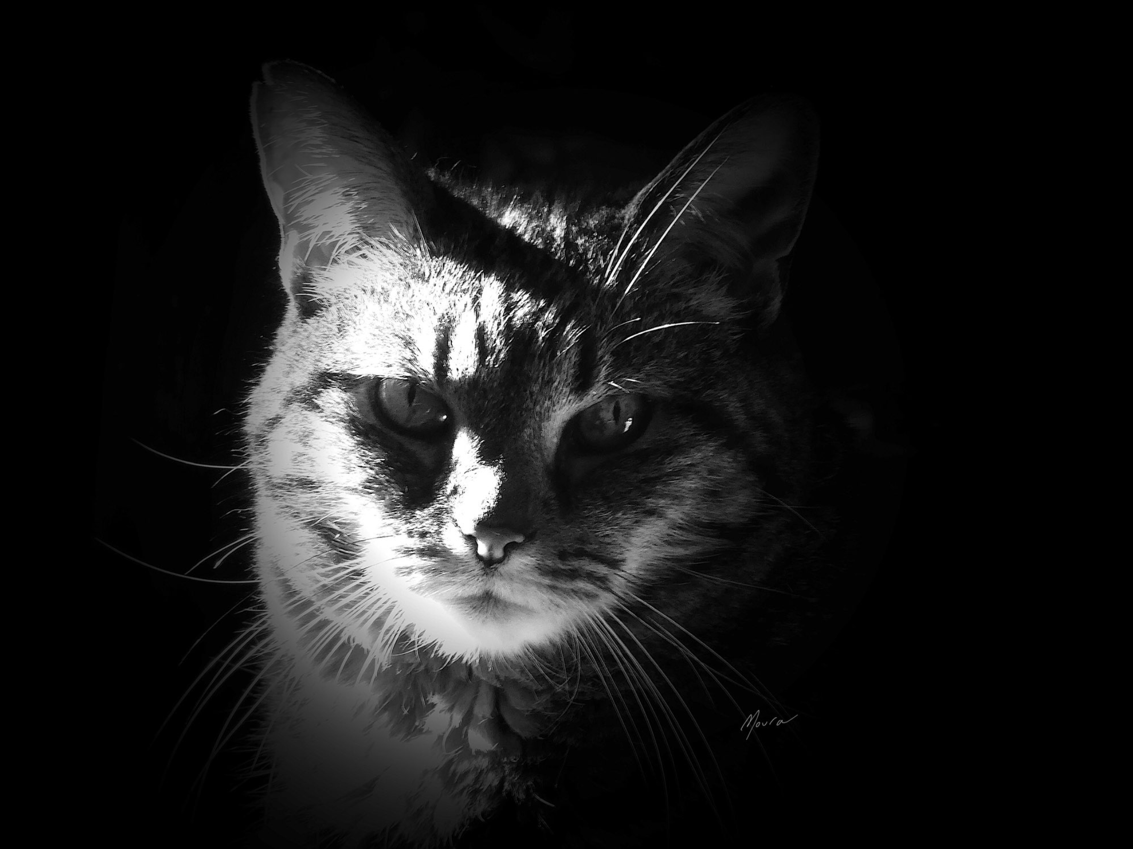 Cat by Elizabeth Moura