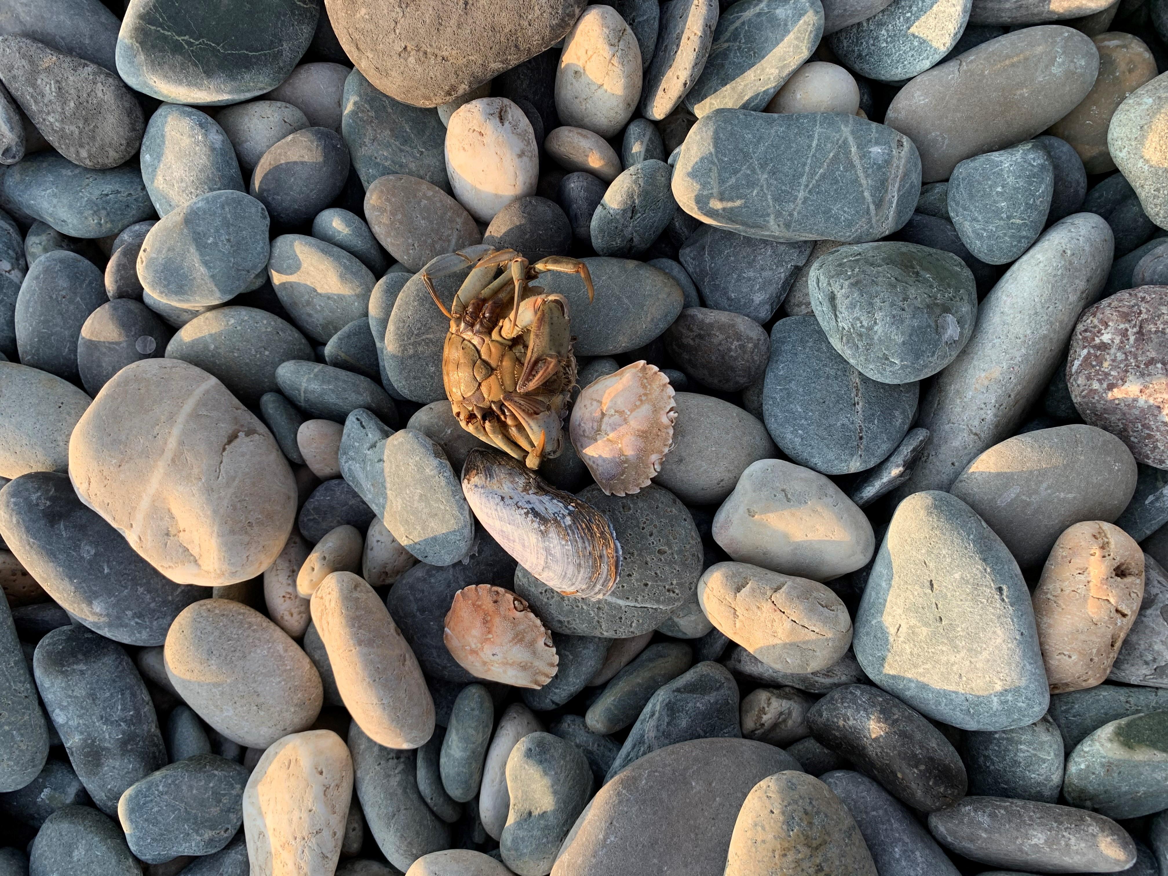 crab by Sarah Louise Wheeler