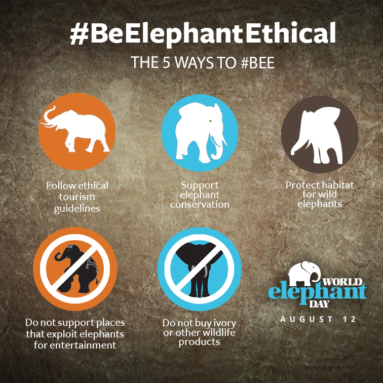 Elephant Ethical poster