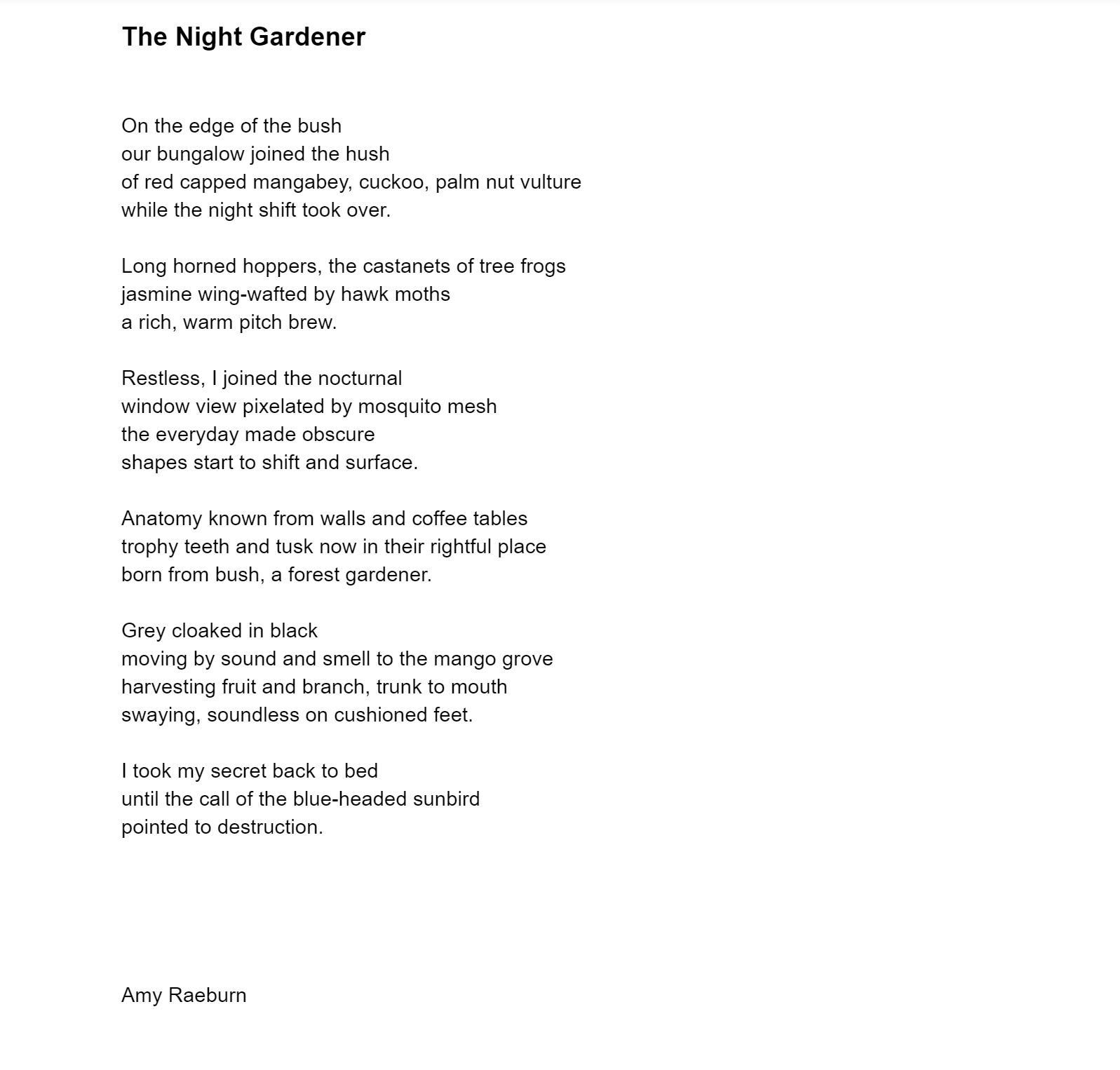 The Night Gardener by Amy